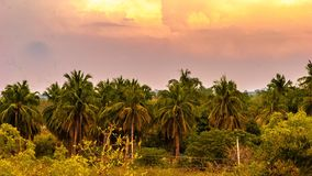 Colourful scenery. Beautiful landscape with palm tree nature Royalty Free Stock Photos