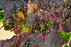 Colourful sea rock on a beach Royalty Free Stock Photography