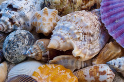 Colourful sea shells Royalty Free Stock Image