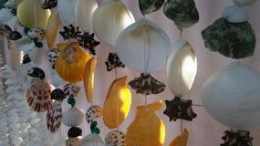 Colourful seashell mobile Stock Images