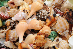 Colourful seashells Royalty Free Stock Image