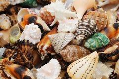 Colourful seashells. Several types of seashells  bakcground Stock Photo
