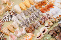 Colourful seashells Stock Photo