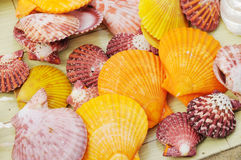 Colourful seashells Royalty Free Stock Images