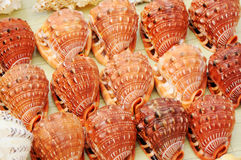 Colourful seashells Royalty Free Stock Photography