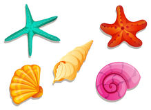 Colourful seashells Stock Images