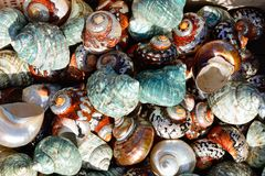 Colourful seashells. Colourful seashells on the quayside, Heraklion, Crete, Greece, Europe royalty free stock photography