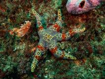 Colourful Seastar Stock Photo