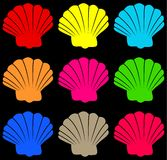 Colourful shell Stock Image