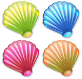 Colourful shells. Illustration of the colourful shells on a white background Stock Photography