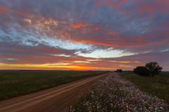 Colourful sky and flowers Stock Photography