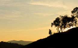 Forest silhouette at sunset Royalty Free Stock Images