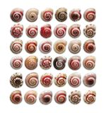 Colourful small snails royalty free stock photography