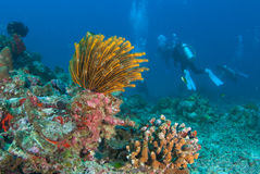 Colourful soft corals in North Andaman , Southern Thailand Royalty Free Stock Photography