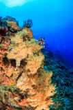 Colourful soft corals - Nusa Lembongan Stock Images