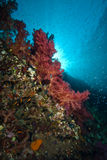 Colourful soft corals with sunbeams Royalty Free Stock Images