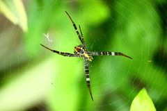Colourful spider Royalty Free Stock Photo
