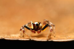 Colourful Spider Royalty Free Stock Image