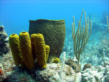 Colourful sponges Stock Images