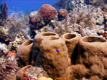 Colourful sponges. A colourful Caribbean reef scene, featuring sponges and soft corals Royalty Free Stock Images