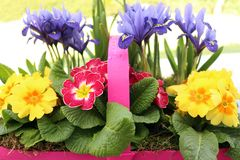 Colourful Spring Flowers Stock Images