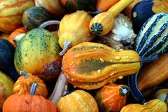 Colourful squash Stock Photography