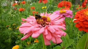 So colourful summer Day in the garden. stock image