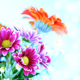 Colourful summer flowers Royalty Free Stock Photo