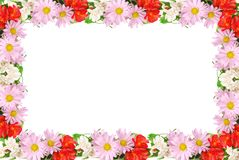 Colourful summer flowers frame Stock Photography