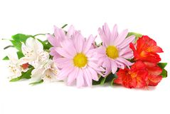 Colourful summer flowers mix. Close-up of colourful summer flowers mix isolated on the white background Stock Photography