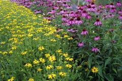 Summer garden border Royalty Free Stock Photography
