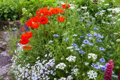 Colourful summer UK cottage garden border. With poppies and love in the mist royalty free stock photos