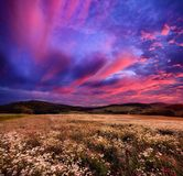 Colourful sunrise over blossoming meadows Stock Images