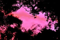 Colourful Sunset Silhouette. A sunset with colourful clouds and a silhouette of eucalyptus trees Stock Photography