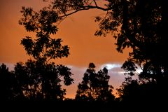 Beautiful Sunset through Eucalyptus Trees. A colourful sunset with a silhouette of eucalyptus trees Stock Photo