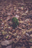 colourful swirley bokeh leaves royalty free stock photo