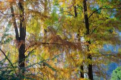 Colourful trees royalty free stock images