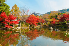 Colourful trees in Japan Stock Photo