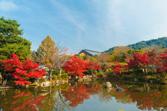 Colourful trees in Japan royalty free stock image