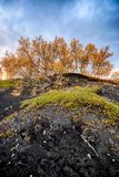 Colourful trees at lake Myvatn in Iceland Stock Image