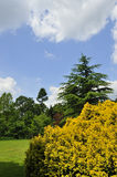 Colourful trees and shrub. Landscape with coniferous trees and yellow shrub or dwarf-tree, Kew Gardens, London Stock Images