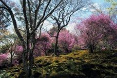 Colourful tress in Tenryu-ji Temple Garden Stock Photo