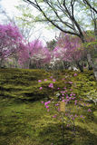 Colourful tress in Tenryu-ji Temple Garden royalty free stock photo