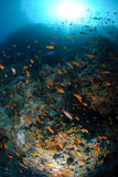 Colourful tropical reef and shoal of fish Royalty Free Stock Photography