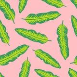 Colourful tropikalny tło projekt Zdjęcia Royalty Free
