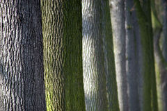 Colourful trunks of trees Royalty Free Stock Photos