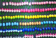 Colourful tulip fridge magnets