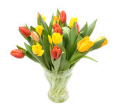 Colourful tulips Royalty Free Stock Photos
