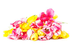 Colourful tulips Stock Image