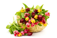 Colourful tulips in a basket Stock Photography